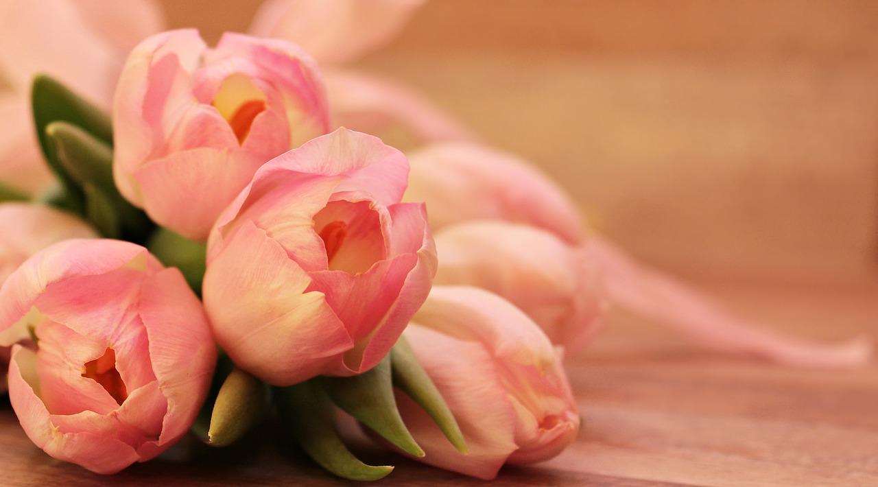 tulips-2068692_1280
